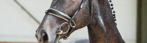 Uwaga !!! Lubuskie Święto Konia odwołane.