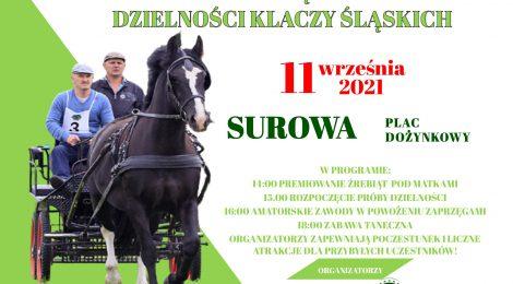 Polowa zaprzęgowa próba dzielności klaczy śląskich-Premiowanie źrebiąt 11.09.2021